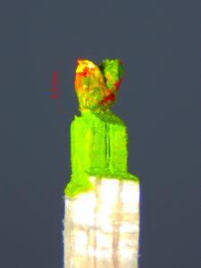 Bunter-Vogel-grün-gelb-rot-mit-Maßstab-1,2 Millimeter-klein